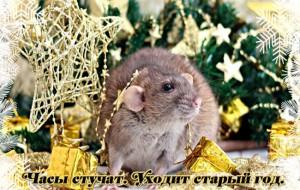 Вітаємо з наступаючим роком Пацюка!